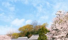 japanese-style_beiz.jp_L19089